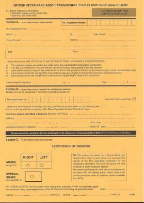Hip Dysplasia Sample Labrador elbow score certificate