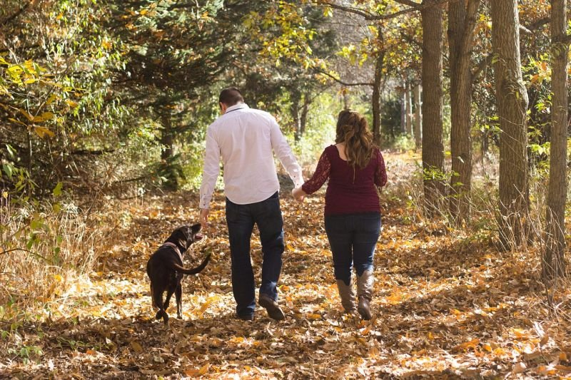 puppy training your dog is part of the family