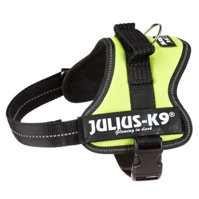 Labrador Collars and Harness The Julius K9 Powerharness the only one we recommend for adult Labradors