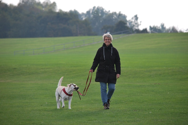 Labrador Collars and Harness - walking your Labrador